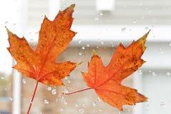 Feuille d'automne Photos stock