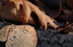 Feuille d'automne avec des baisses de l'eau paradis de nature d'élément de conception de composition Images stock