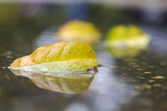 Feuille d'automne dans l'eau Photos stock