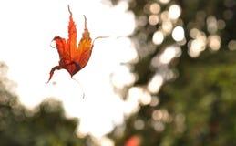 Feuille d'automne dans l'entre le ciel et la terre Photographie stock libre de droits