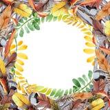 Feuille d'automne de cadre d'acacia dans un style tiré par la main d'aquarelle Photographie stock libre de droits