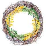 Feuille d'automne de guirlande d'acacia dans un style tiré par la main d'aquarelle Images stock