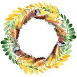 Feuille d'automne de guirlande d'acacia dans un style tiré par la main d'aquarelle Image stock