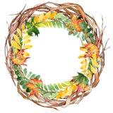 Feuille d'automne de guirlande d'acacia dans un style tiré par la main d'aquarelle Images libres de droits