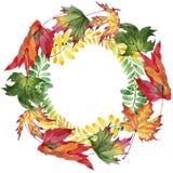 Feuille d'automne de guirlande d'acacia dans un style tiré par la main d'aquarelle Photo libre de droits