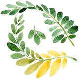 Feuille d'automne de l'acacia dans un style tiré par la main d'aquarelle d'isolement Photos libres de droits