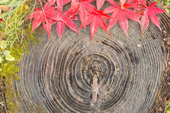 Feuille d'automne et mousse verte sur le vieux tronçon Image libre de droits