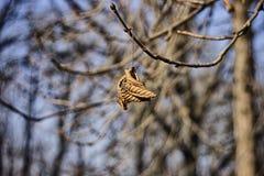 Feuille d'automne sur la branche Photographie stock