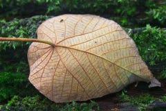 Feuille d'automne sur la forêt d'identifiez-vous photos stock