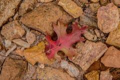Feuille d'automne sur les roches photo libre de droits
