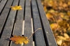 Feuille d'automne sur un banc en parc Photos stock