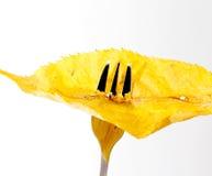 Feuille d'automne sur une fourchette d'isolement sur un fond blanc Image stock