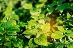 Feuille d'herbe avec la lumière du soleil Images libres de droits