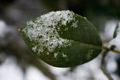 Feuille d'hiver image libre de droits