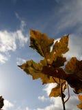 Feuille d'octobre Photo libre de droits