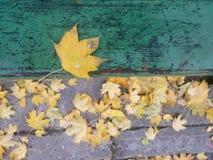 Feuille d'octobre Photographie stock libre de droits