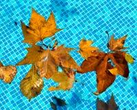 Feuille dans l'eau Photographie stock
