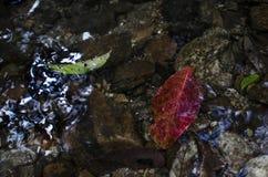 Feuille dans l'eau Photos libres de droits