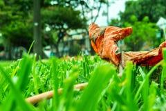 Feuille dans l'herbe verte image stock