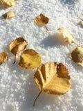 Feuille dans la neige Photos stock