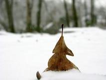 Feuille dans la neige Photographie stock libre de droits