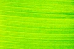feuille de banane Images stock