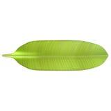feuille de banane illustration de vecteur