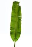 Feuille de banane sur le blanc Photographie stock libre de droits