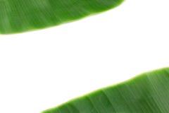 Feuille de banane sur le blanc avec l'espace de copie Photos stock