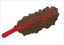 Feuille de betterave rouge Image libre de droits