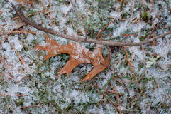 Feuille de Brown avec la première neige de l'année Photos stock