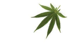 Feuille de cannabis photographie stock libre de droits