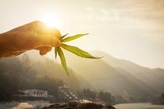 Feuille de cannabis dans la main dans le coucher de soleil sur le fond brouillé Photo stock
