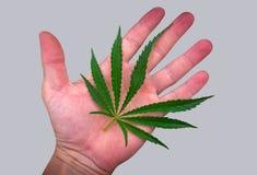 Feuille de cannabis sur la paume d'isolement sur le gris marijuana Images libres de droits