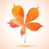 Feuille de châtaigne peinte par aquarelle orange Photographie stock libre de droits
