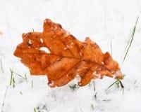 Feuille de chêne de Brown sur la pelouse avec la neige fraîche Images libres de droits