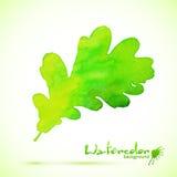 Feuille de chêne de vecteur peinte par aquarelle verte Images libres de droits