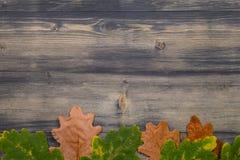 Feuille de chêne sur le fond en bois noir Images stock