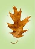 Feuille de chêne sur le rétro fond vert d'isolement Photographie stock libre de droits