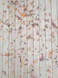 Feuille de chute d'automne Photographie stock