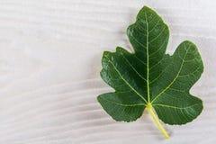Feuille de figues semblable à la feuille d'érable Photographie stock libre de droits