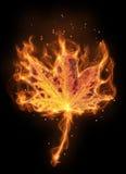 Feuille de flamme d'automne Photo stock