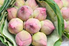 Feuille de fleur de Lotus Image libre de droits