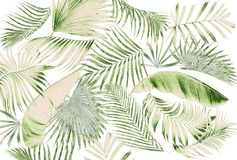 Feuille de fond de palmier Images stock