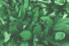 Feuille de fond de pouvoir-lis Modèle vert dans des tons amortis Photos stock