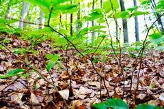 Feuille de forêt Photos libres de droits