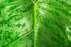 Feuille de forêt tropicale photographie stock libre de droits
