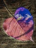 Feuille de forme de coeur image libre de droits
