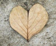Feuille de forme de coeur dans le ton noir et blanc dramatique Photos stock