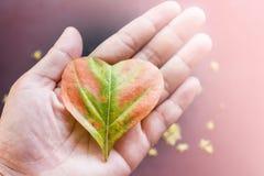 Feuille de forme de coeur en main dans doucement le rose pour le CCB doux de concept d'amour Photographie stock libre de droits